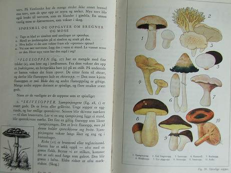 Naturebook1