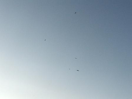 Seabirds 4