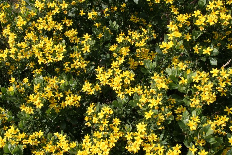 Yellow wildflowers- med