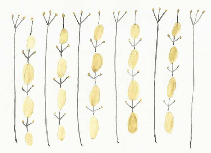 Mustard pattern