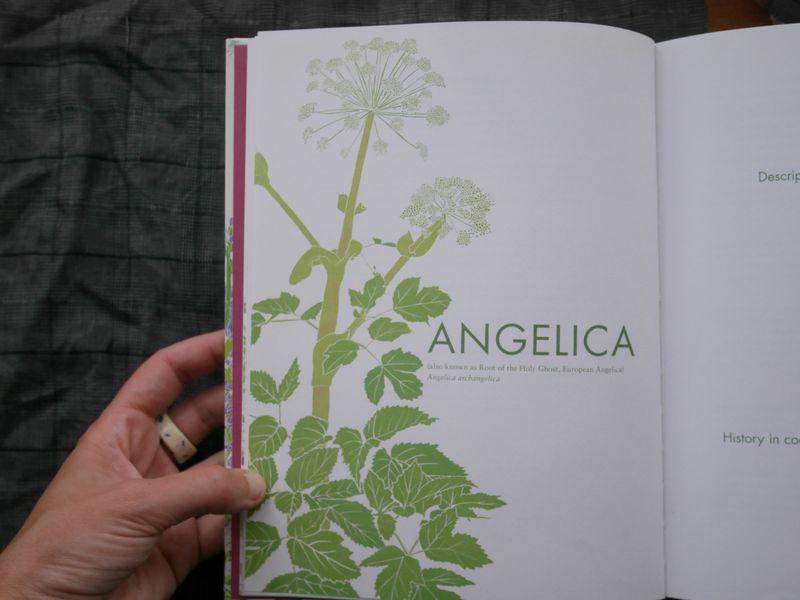 Angelica 2