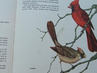 Cardinalpage