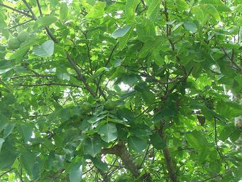 Treesun2
