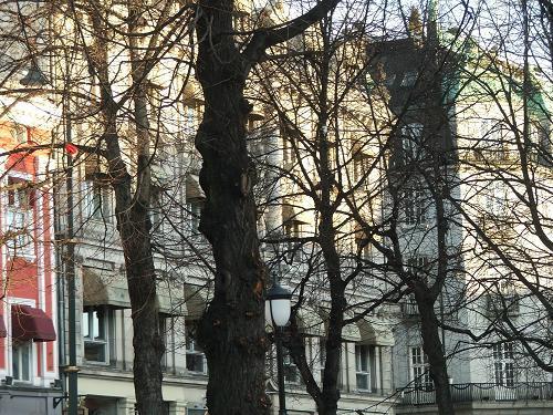 Oslo_trees_2